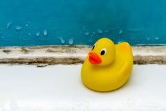 Vorm in bad, een eendstuk speelgoed in een vuile badkamers stock fotografie