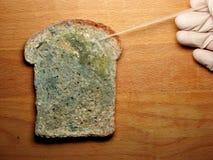 Vorm op het brood Stock Foto's