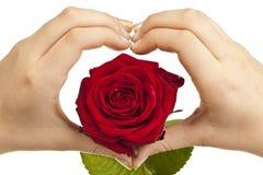 Vorm van het hart met handen en rood nam toe Royalty-vrije Stock Foto's