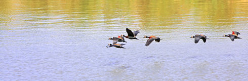 Vorming van vogels royalty-vrije stock fotografie