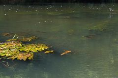 Vorona flod Arkivbild