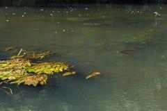 Vorona-Fluss stockfotografie