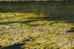 Vorona-Fluss lizenzfreies stockfoto