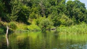 Vorona rzeka Obraz Stock