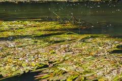 Vorona rzeka Zdjęcie Royalty Free