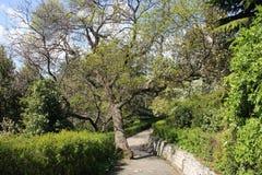 Vorontsov Park in Alupka. A wonderful alley of Vorontsovsky Park in Crimea stock photos
