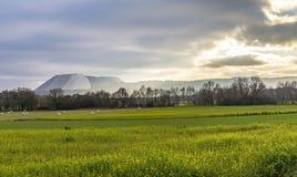 Vorrat in der ländlichen Landschaft Lizenzfreies Stockfoto
