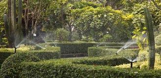 Vorsatz-Spray im Garten Lizenzfreies Stockfoto