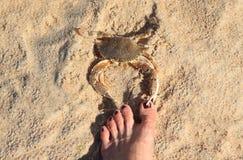 Vorsicht: beißender Fuß der Krabbe auf Strand Lizenzfreie Stockfotografie