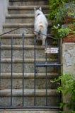 Vorsicht, bissiger Hund Lizenzfreies Stockfoto