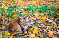 Vorsichtige Katze im Herbst lizenzfreie stockfotografie