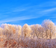 Vorst behandelde boombovenkanten op een achtergrond van blauwe hemel Stock Afbeeldingen