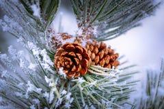 Vorst Behandelde Pinecone bij Kerstmis royalty-vrije stock afbeeldingen
