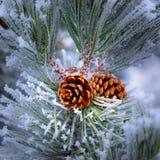 Vorst Behandelde Pinecone bij Kerstmis stock foto