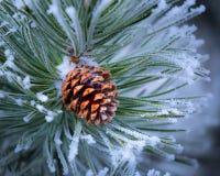 Vorst Behandelde Pinecone bij Kerstmis royalty-vrije stock afbeelding