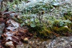 Vorst de rand van het water in een de winterlandschap Royalty-vrije Stock Foto's