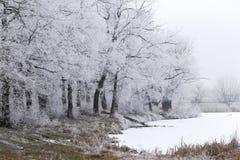 Vorst, eerste sneeuw, de winter, bomen in rijp stock afbeeldingen