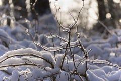Vorst en zon Bevroren takken in het bos Royalty-vrije Stock Foto's
