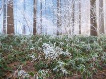 Vorst in het bos van de Zwitserse Alpen Stock Foto's