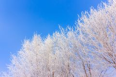 Vorst op bomen in de blauwe hemelwinter mornimg Royalty-vrije Stock Afbeelding