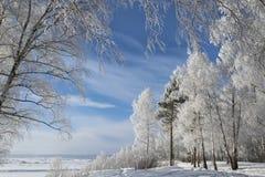 Vorst op bomen in Siberië royalty-vrije stock fotografie