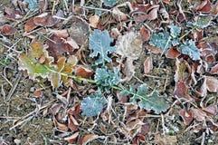 Vorst op de bladeren en de stelen op het gebied stock fotografie
