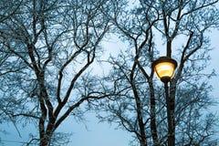 Vorst op de naakte takken van bomen en straatlantaarn bij donkere de winteravond in stadspark Silhouet van hout en straatpost Royalty-vrije Stock Fotografie