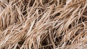 Vorst op de winter gebruind gras royalty-vrije stock fotografie
