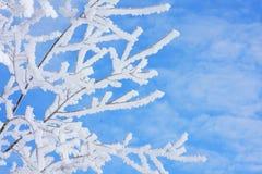 Vorst op de wintertakken stock afbeelding