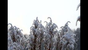 vorst op droog gras stock videobeelden