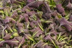 Vorst op gazongras en bladeren van bomenclose-up in de herfst Het concept de eerste vorst royalty-vrije stock fotografie
