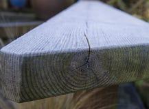 Vorst op logboekzetel met houten korrel Stock Fotografie