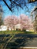 Vorstadtblüten Lizenzfreies Stockbild