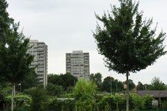 Vorstadtgebiet mit grünen Bäumen Stockfoto