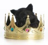 Vorstelijk puppy royalty-vrije stock foto