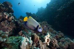 Vorstelijke zeeëngel en oceaan stock afbeeldingen
