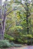 Vortice del terreno boscoso fotografia stock