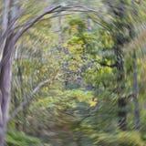Vortice del terreno boscoso immagini stock