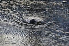 Vortice dell'acqua immagine stock libera da diritti