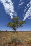Vorwärtskommen in den rauen surooundings - Baum Mittel-Australien lizenzfreies stockbild