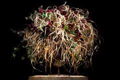 Vorzügliche Blumenanordnung mit roten Tulpen Stockfotos