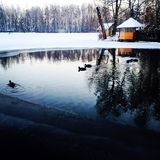 Vorzel河湖森林雪餐馆树低头冰水 库存照片