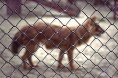 Vos in dierentuin Royalty-vrije Stock Fotografie