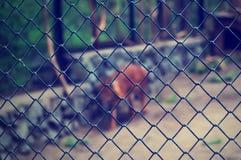 Vos in dierentuin Stock Foto