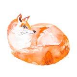 Vos op witte achtergrond wordt geïsoleerd die watercolor Royalty-vrije Stock Foto