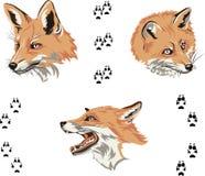 Vos, portret, kleur, de snuit van de vos, vector, silhouet, reeks Royalty-vrije Stock Afbeeldingen