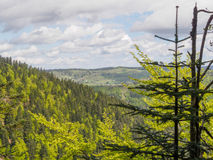 Vosges hills from behind some pine tree tops Stock Photography