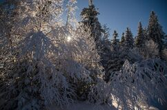 Vosges2014-14 Royalty Free Stock Images
