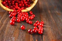 Vossebes, foxberry, Amerikaanse veenbes, lingonberry slokjes van de mand op een bruine houten lijst royalty-vrije stock afbeeldingen