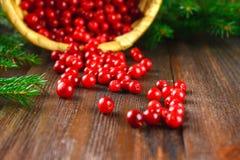 Vossebes, foxberry, Amerikaanse veenbes, lingonberry slokjes van de mand op een bruine houten lijst Omringd door spartakken stock afbeeldingen